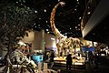 Perot Museum of Nature and Science February 2018 1 (Life Then and Now Hall).jpg