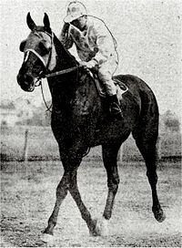 Peter Pan American Horse Wikipedia