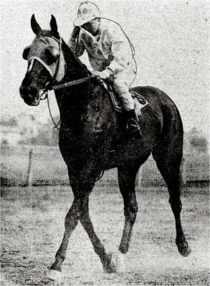 Peter Pan (American horse) - Image: Peter Pan I