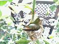 Phoebe Allen's Hummingbird.jpg