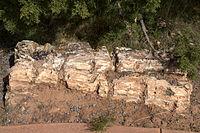 Piece of petrified wood Escalante Petrified Forest State Park.jpg