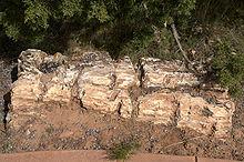 uhlíkované zkamenělé dřevo nejlepší datování aplikace zdarma 2014