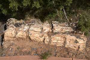 Escalante Petrified Forest State Park - Large piece of petrified wood in Escalante Petrified Forest State Park