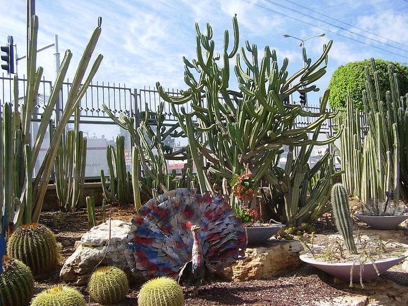 גן הקקטוסים בחולון