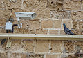 PikiWiki Israel 42225 Bird watching video camera.jpg