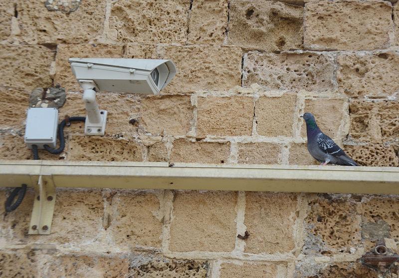 ציפור צופה במצלמה