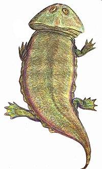 Plagiosaurus DB.jpg