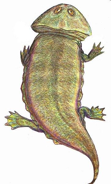 File:Plagiosaurus DB.jpg