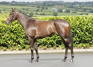 Pleascach Irish-bred Thoroughbred racehorse