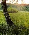 Podmokłe łąki - panoramio.jpg