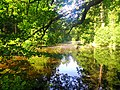 Pond - Flickr - Stiller Beobachter.jpg