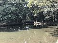 Pond of Miyazaki Shrine 2.jpg