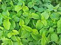 Porped green........jpg