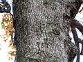 Post Oak (30361658423).jpg