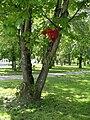 Praha, Bubenec - park Generala Lazaro Cardenase 3, panak na strome.jpg