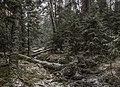 Prigorodnyy r-n, Sverdlovskaya oblast', Russia - panoramio (147).jpg