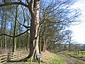 Private Track - geograph.org.uk - 133126.jpg