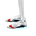 Proximal phalanges of foot02 lateral view.png