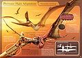 Pterosaur Flight Adaptations - Pteranodon sternbergi - Hugo Salais López.jpg
