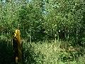 Public Footpath through woodland - geograph.org.uk - 514007.jpg