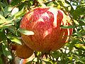 Punica granatum plod.jpg