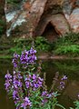 Purple wild flowers with Angels Cave on a background.jpg