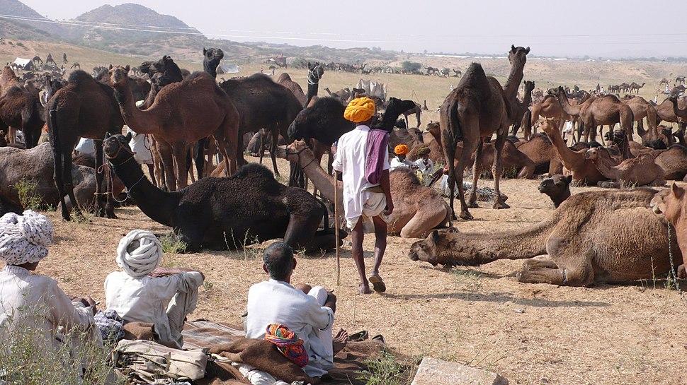 Pushkar.in Camel Fair 2007 - panoramio