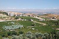 Qsarnaba,grapes.jpg