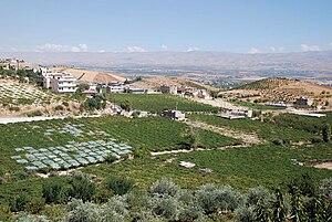 Kasarnaba - Grapes in vineyard below village of Qsarnaba