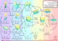 Quadratic Surfaces.png