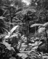 Queensland State Archives 1245 Fairyland Tropical Gardens near Kuranda c 1935.png