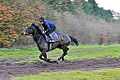 Race Horse On Gallops (8236293870).jpg