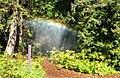 Rainbow in San Francisco Botanical Garden (26966).jpg