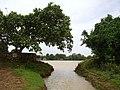 RanjanPada Lake - panoramio - Rohan Patil.jpg