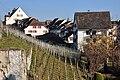 Rapperswil - Weingut IMG 2945.JPG