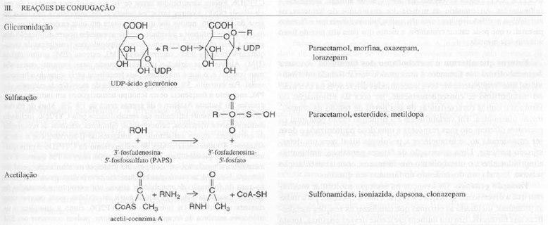 Metabolismo das drogas - Wikipédia, a enciclopédia livre