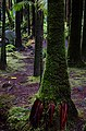 Red Roots, Green Moss (24349741191).jpg