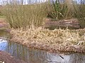 Reed Bed Change - geograph.org.uk - 1225792.jpg