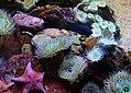 Reef Scene (26488523085).jpg