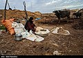 Relief to Flood-affected ranchers by the Barakat Foundation & Basij012.jpg