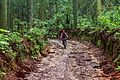 Reserva Florestal Alfredo Weiszflog.jpg