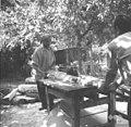 Rezanje lesa za gajbe, pri Žmucu, Male Lipljene 1964.jpg