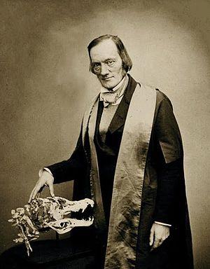 Richard Owen - Richard Owen in 1856 with the skull of a crocodile