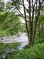 River Derwent - geograph.org.uk - 486564.jpg