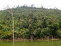 River and forest in Bogor, West Java.jpg