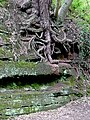 Rock and roots by the canal at Tyrley, Shropshire - geograph.org.uk - 1591117.jpg