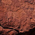 Rock engraving in Twyfelfontein.jpg