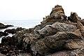 Rocky Pacific - panoramio - Vadim Manuylov.jpg