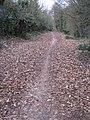 Rooksdown Lane - geograph.org.uk - 1746782.jpg