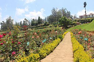 Government Rose Garden, Ooty - Rose Garden View in Ooty, Tamil Nadu.